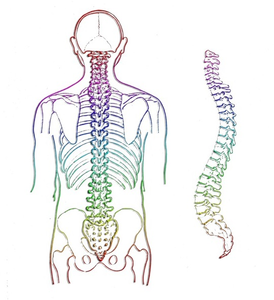 Chiropractic Benefits - Spine Image